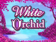 Игровой слот Белая Орхидея